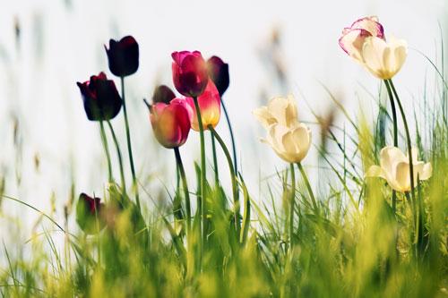 Frühlingsblumen - Bild - kostenlos - lizenzfrei - Fotografie