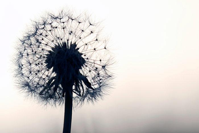 Schone Blumenbilder Kostenlose Und Lizenzfreie Naturfotos Mit Blumen Zum Ausdrucken